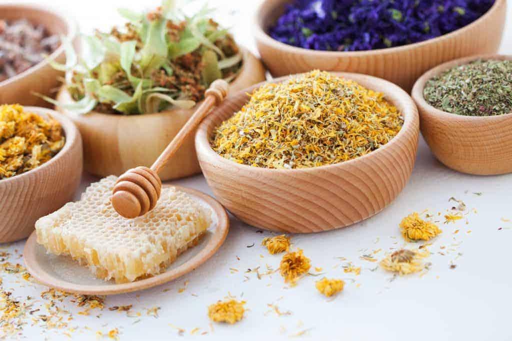 learn herbalism kenya