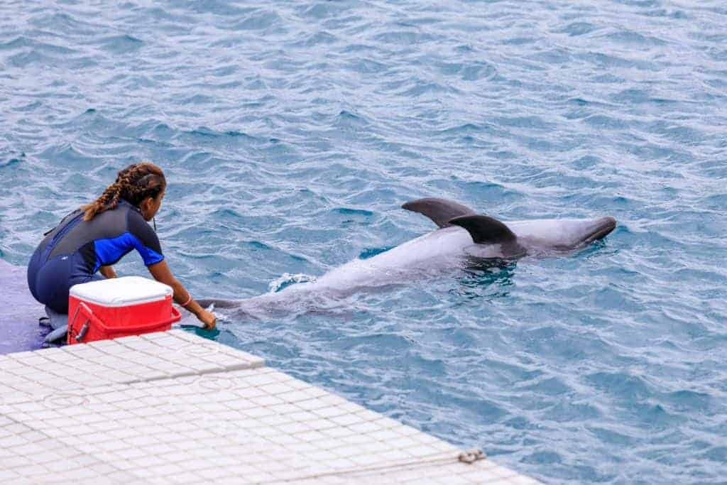 Instructor with Dolphin at Ocean Adventure Subic bay