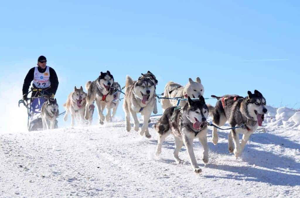 Take a dog sledging tour