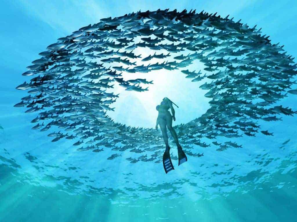 Eye of the ocean