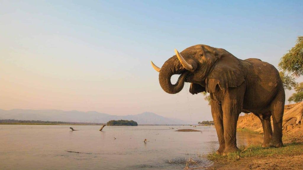 mana pools national park zimbabwe