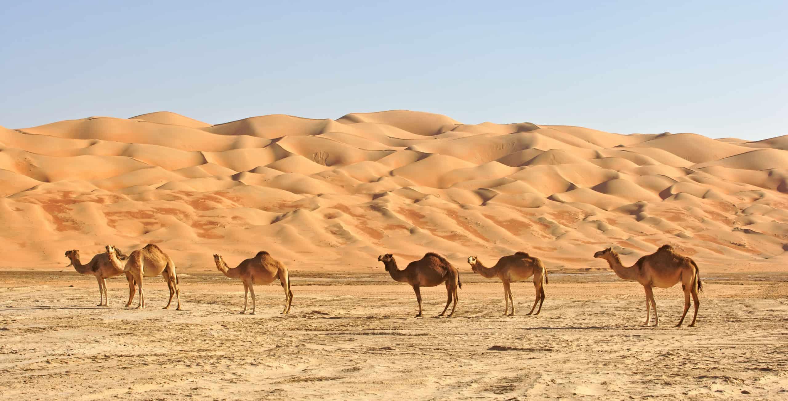 When to go to Saudi Arabia