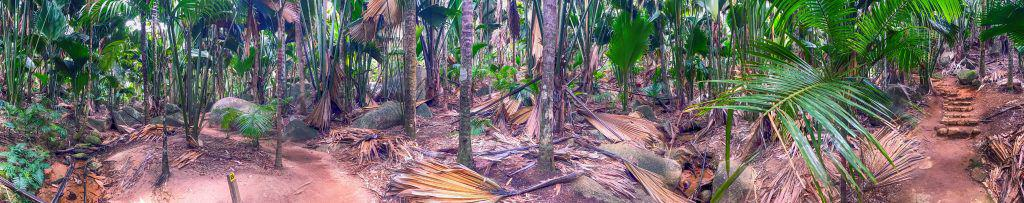 Vallee de Mai Natural Reserve, Praslin panoramic view of palm fo