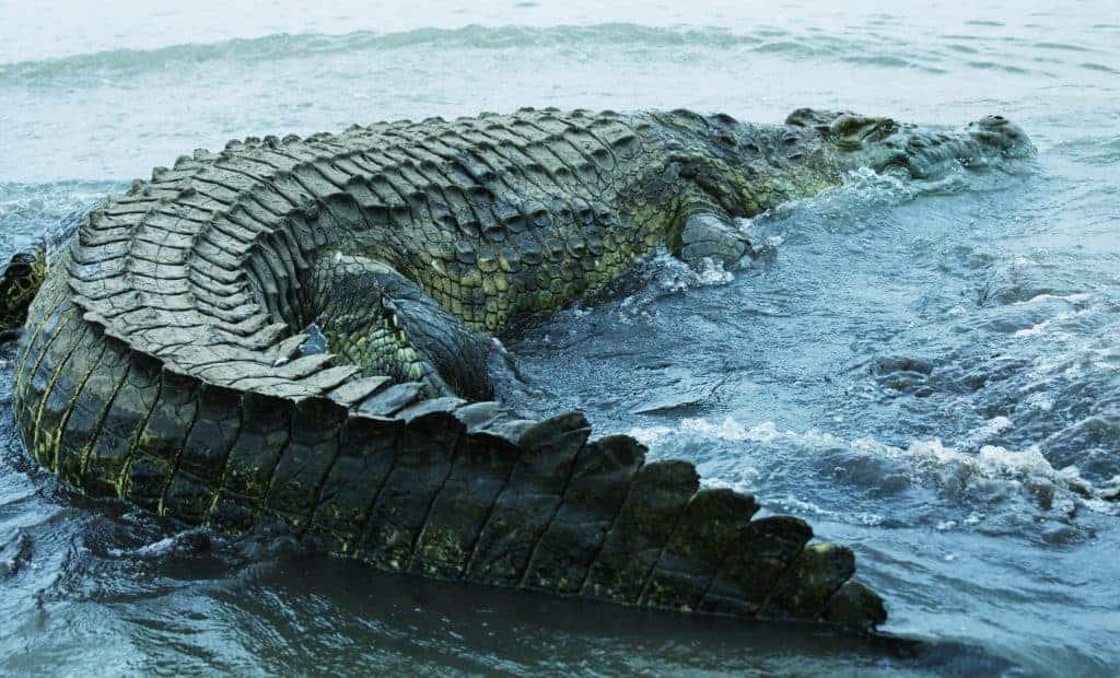 The Lake of the Royal Crocodile