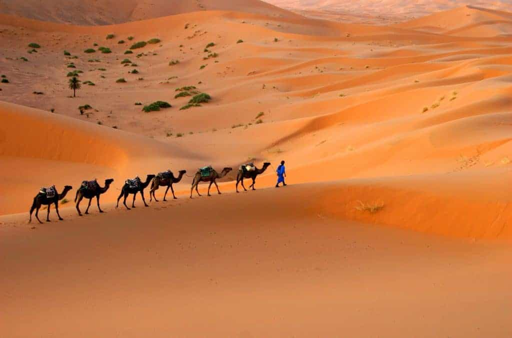 Camp out in the Sahara desert