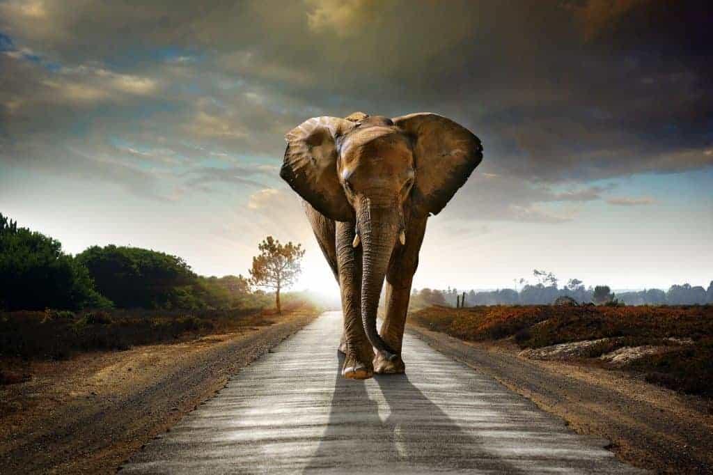 Go on a walking safari