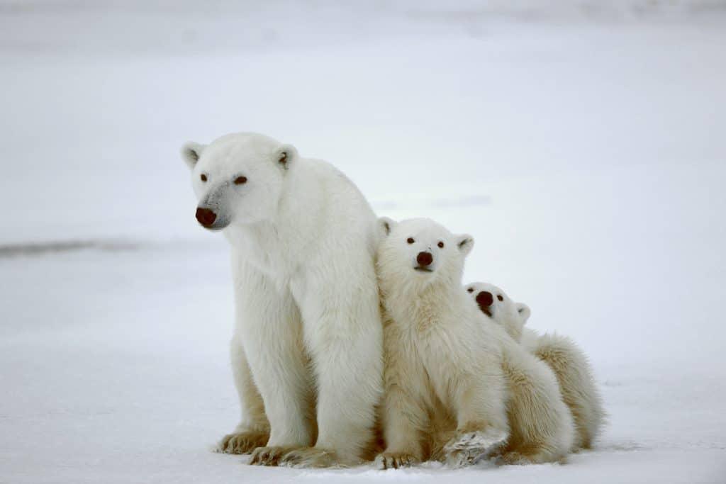 Go on a bear safari tour