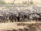 What to do in Botswana