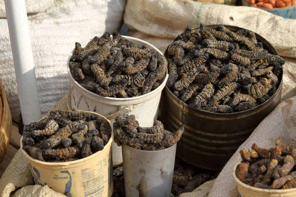 Mopane worms
