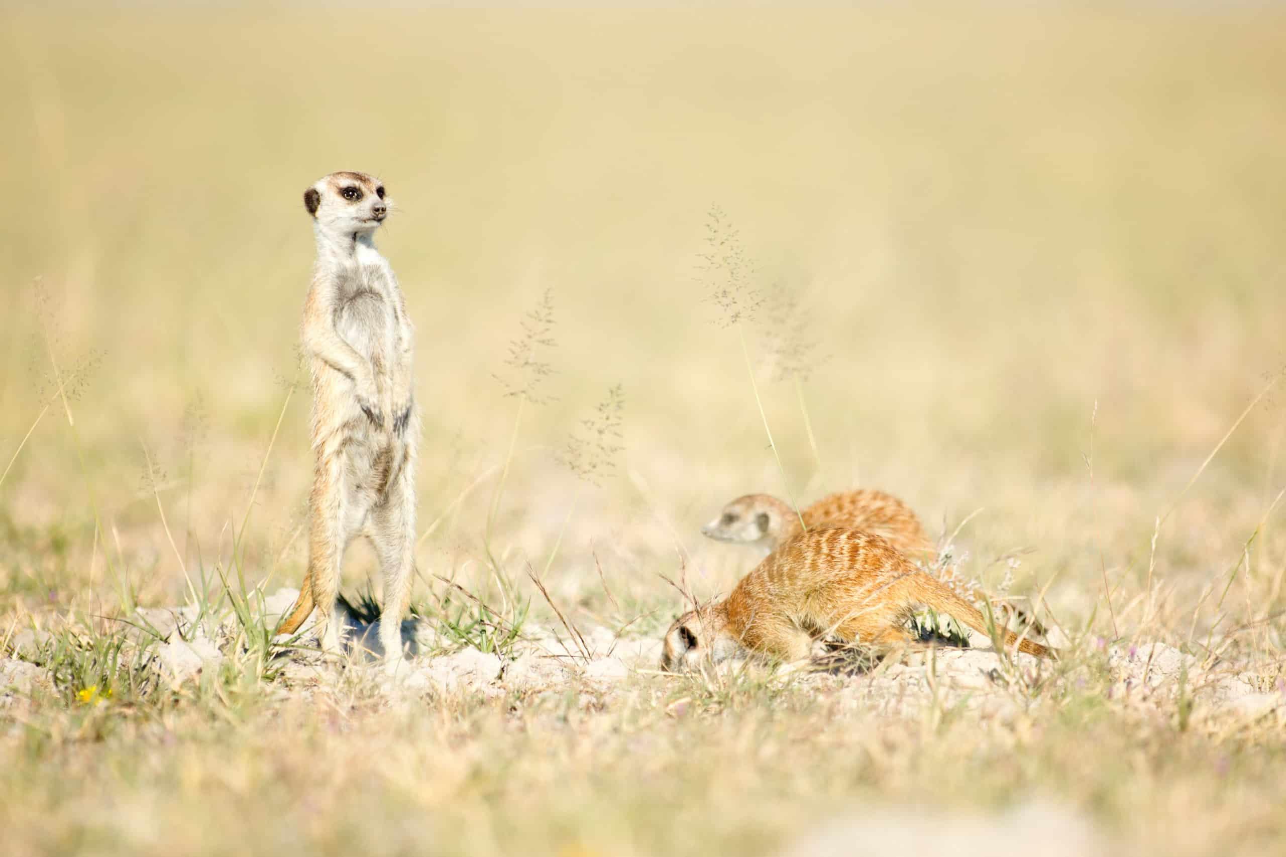 When to visit Botswana