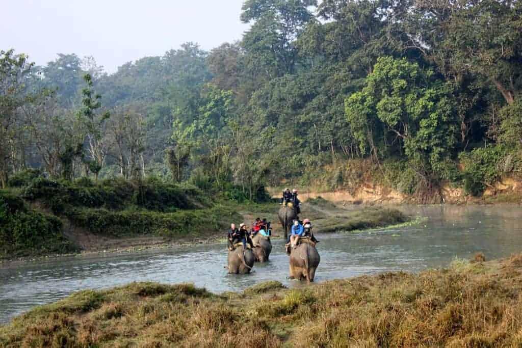 Visit an elephant orphanage