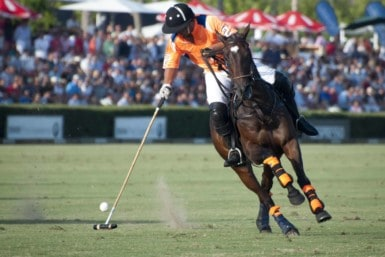 Watch a polo match