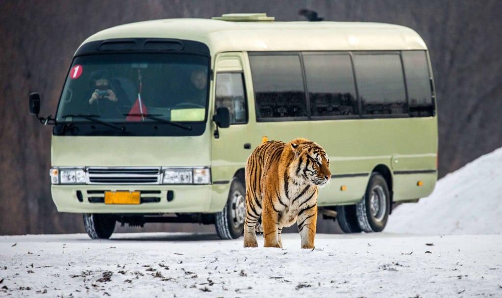 Visit the animal refuge